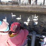 白鳥見学(保育園)